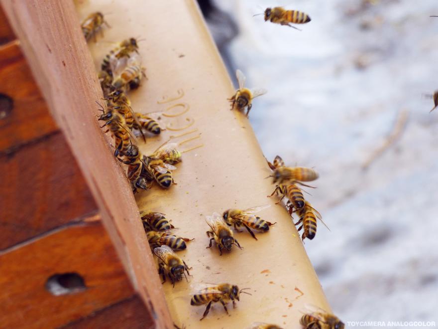 le miel de paris