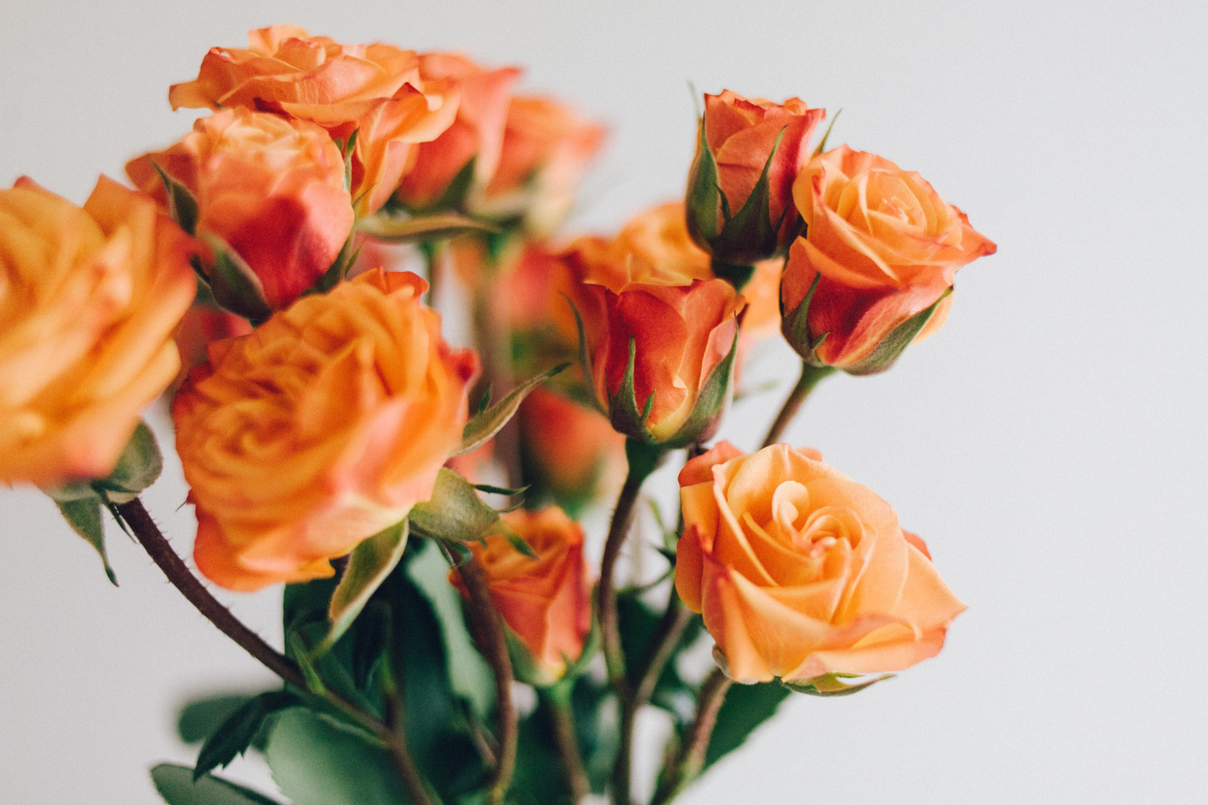 bouquet de fleurs interflorat